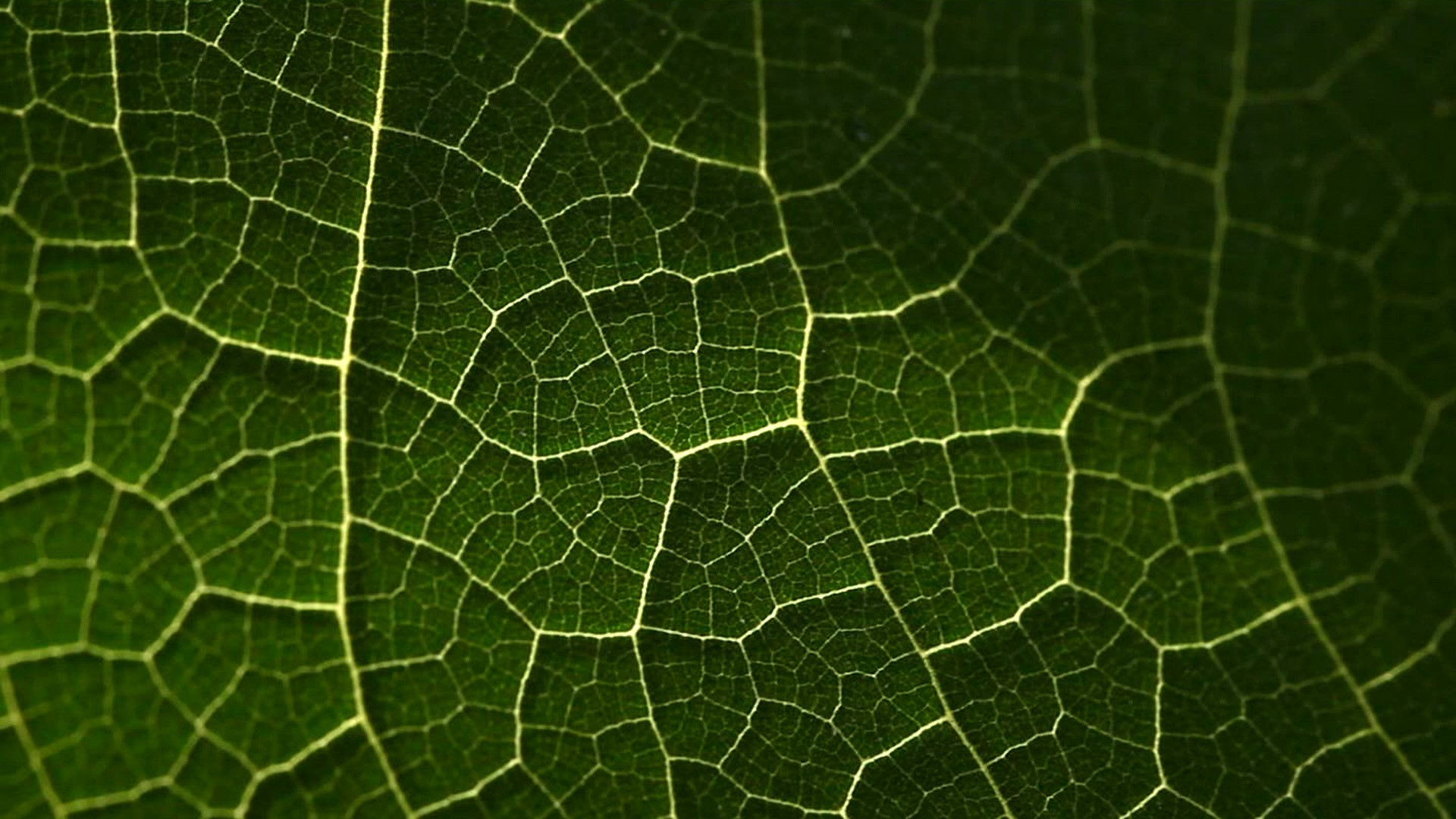 FUTURE GREEN